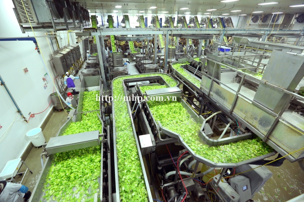 McDonalds Field to Restaurant event which began with staging at a McDonald's in San Jose and incorporated a trip to Taylor Farms in Salinas to see how lettuce is picked and processed followed by lunch at the National Steinbeck Center.  A group of McDonald's owner operators, journalists, bloggers, and food industry providers toured a Taylor Farms lettuce processing facility in Castroville. McDonald's Photo by Tomas Ovalle